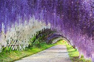 Wisteria Flower Tunnel, Japan 83 Unreal Places You