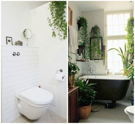 Best Pot Plant For Bathroom by Bathroom Bathroom Plants For Fresh And Dramatic