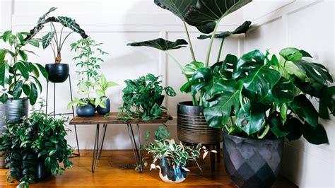 Designing With Potted Plants  Sunset Magazine