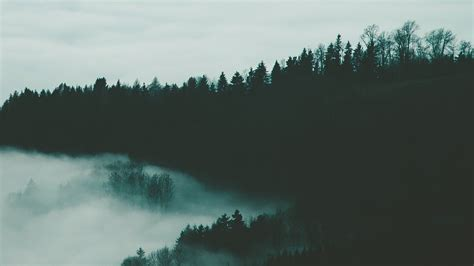 wallpaper  forest fog trees night height background
