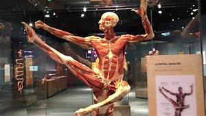 Amazing Body Works Exhibit At Tech Museum In San Jose