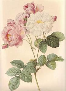 1000+ ideas about Vintage Flower Prints on Pinterest ...