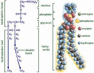 Bio 1406 Study Guide  2013-14 Holman