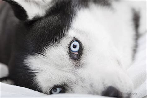 are all dogs color blind are dogs really color blind