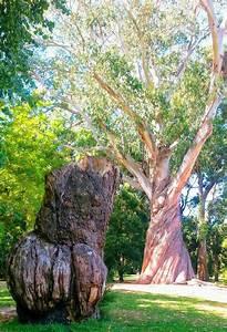Bäume Für Den Garten : gartenb ume grunds tzliches ber b ume f r den garten ~ Lizthompson.info Haus und Dekorationen