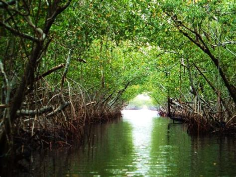 Everglades Boats Pictures by Airboat Ride Gallery
