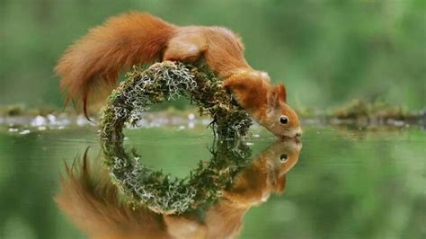 squirrel wallpapers  background images stmednet