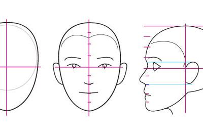 human anatomy fundamentals basics   face