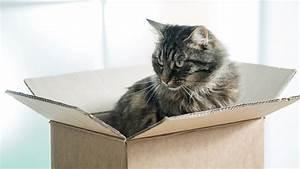 Mit Katze Umziehen : mit katzen umziehen so erleichtern sie ihren katzen die ~ Michelbontemps.com Haus und Dekorationen