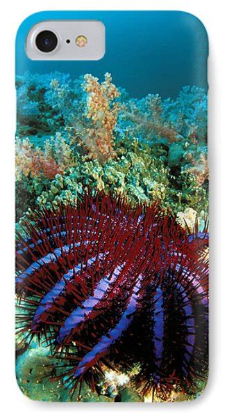 Thailand Marine Life Photograph By Dave Fleetham