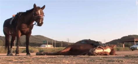 dramatic horse whenever tries acts anyone ride dead smarter him shows animals than oct