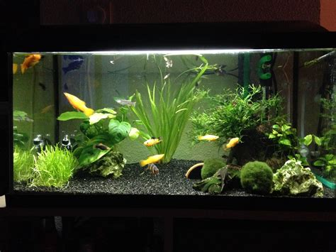 comment amenager un aquarium de 60l