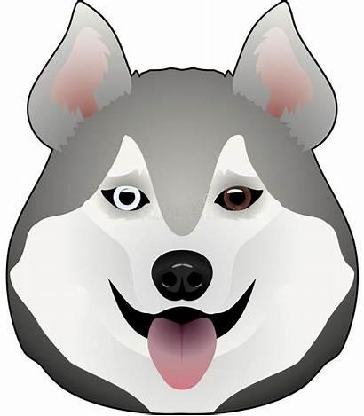 Husky Alaskan Malamute Illustrations Vectors Dog