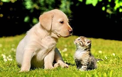 Forever Friends Friendship Puppy Nature Kitten Gogs