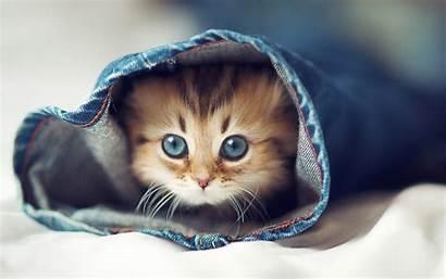 Cat Cats Lovely Pixelstalk
