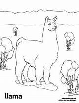 Coloring Peru Llama America Picchu Machu Activities Teacherspayteachers Animals Getcolorings sketch template