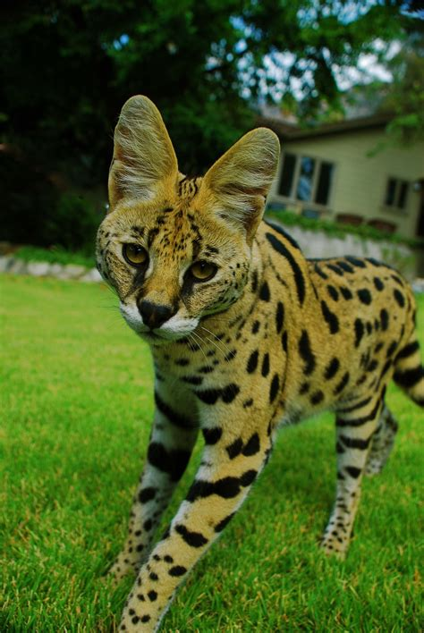 Sun 11 Oct 2015 Exotic Animals HD Backgrounds for PC