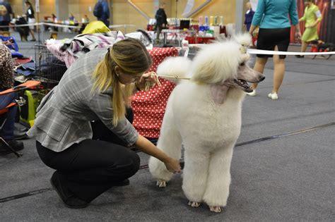 Suņu izstādē pulcējas populāras un retas mīluļu šķirnes ...