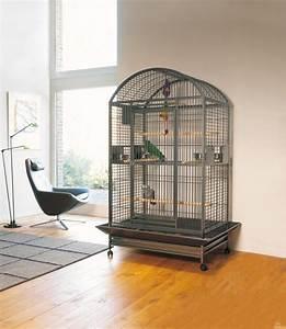 Cage A Perroquet : 25 best ideas about cage perroquet on pinterest cage pour perruche cage pour perroquet et ~ Teatrodelosmanantiales.com Idées de Décoration