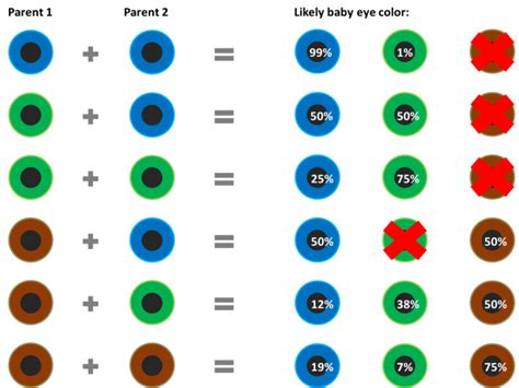 baby eye color predictor baby eye color prediction