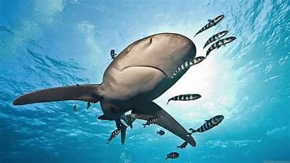 Widescreen Wallpapers Desktop Background Underwater Animals Wallpapersafari