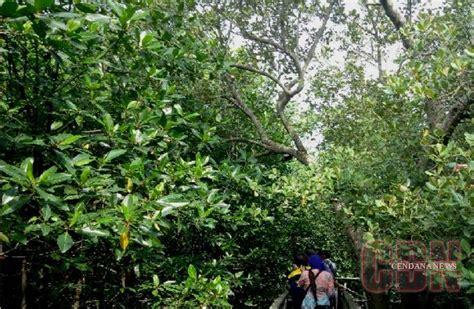 hutan mangrove  sriminosari hidupkan ekonomi warga