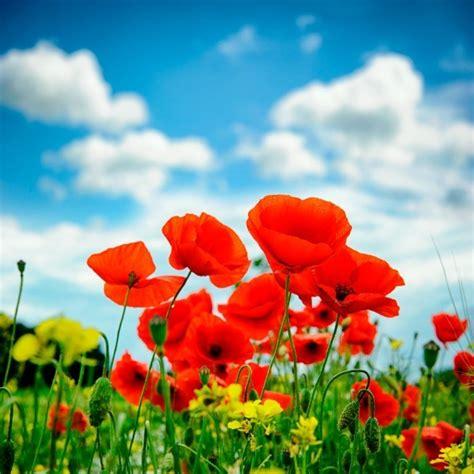 summer garden flower  thriftyfun