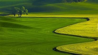Zielone Pola Drzewo