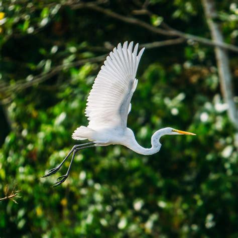 amazon wildlife list amazon river animals amazon jungle