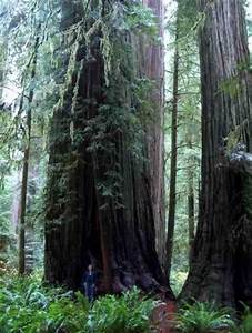 Geog 5 Lab 1G Final Projects: Northern California Redwood ...