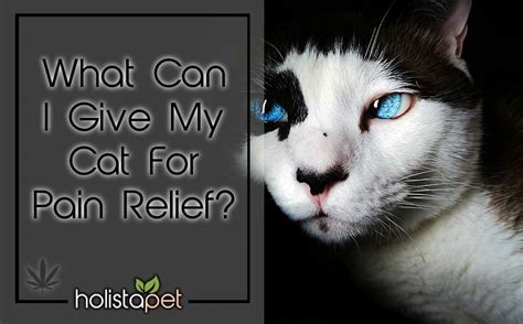 can i give my cat paracetamol
