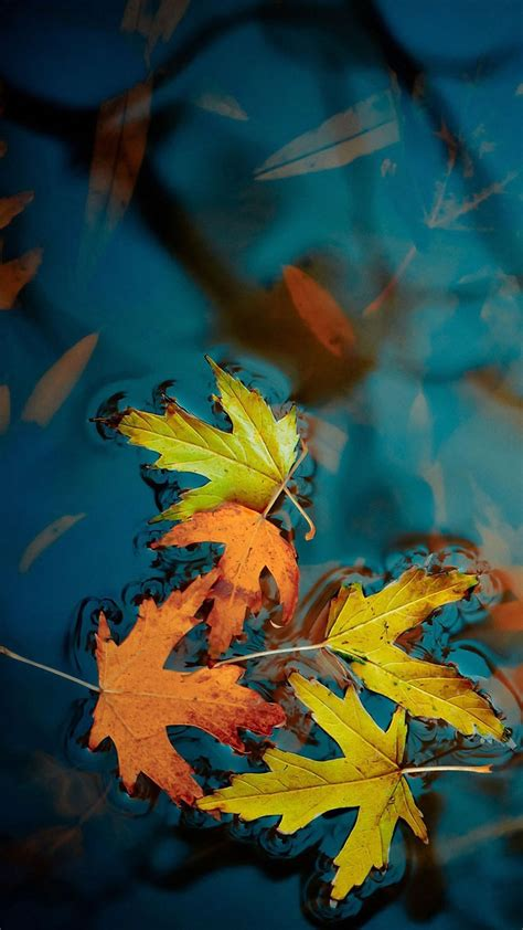 Beautiful Fall Leaves Iphone Wallpaper by Falling Leaves On The Water Tap To See More Beautiful