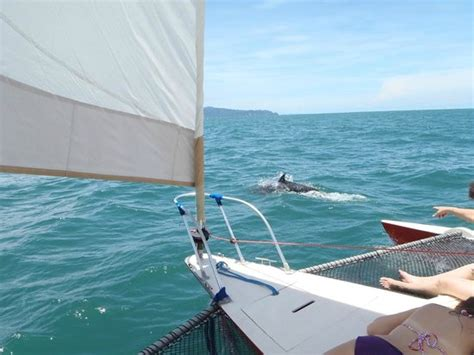 Boat Rental Jaco Costa Rica by Kayak Jaco All You Need To Before You Go With