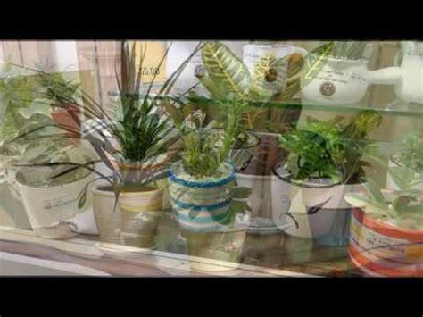 tanaman hias ruang tamu youtube
