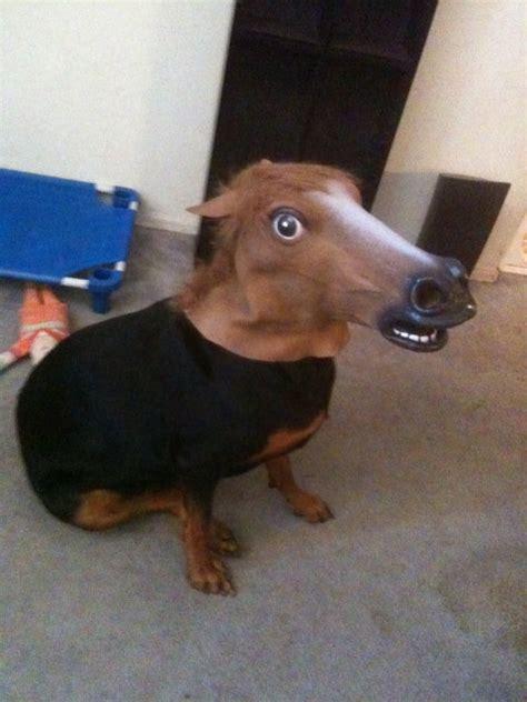 genuinely terrifying halloween dog costumes metro news