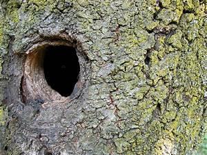 Comment Creuser Un Tronc D Arbre : gros plan d 39 un tronc d 39 arbre avec un trou photographie krispi313 7845176 ~ Melissatoandfro.com Idées de Décoration