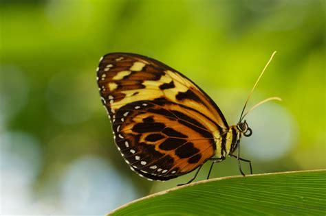 Botanischer Garten München Schmetterlinge by Tropische Schmetterlinge Im Botanischen Garten M 252 Nchen