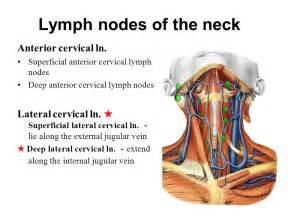 Anterior Cervical Lymph Nodes