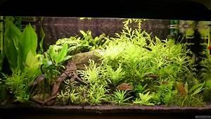 Co2 Rechner Aquarium : mein kleines aquarium flowgrow aquascape aquarium database ~ A.2002-acura-tl-radio.info Haus und Dekorationen