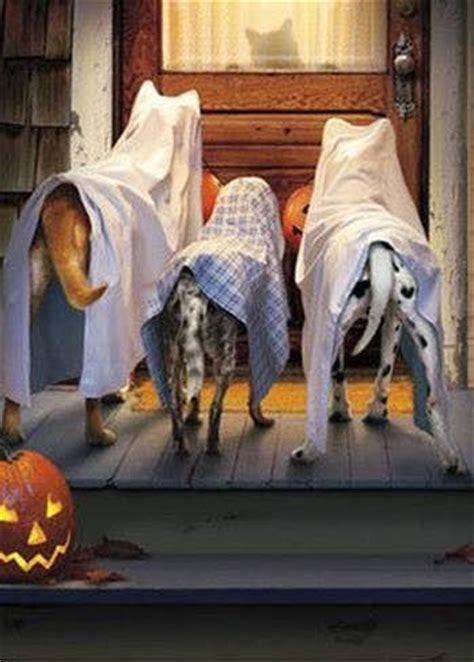 halloween ghost dogs pictures   images