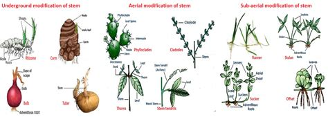 Names Of Modified Roots by Stem Modifications Mnemonic