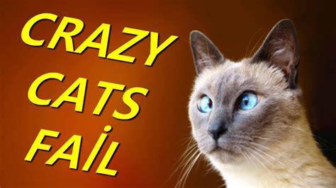 crazy cats funny cat fail compilation failman youtube