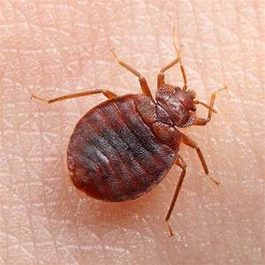 how to kill bed bugs on clothes 28 images specialist With does laundry kill bed bugs