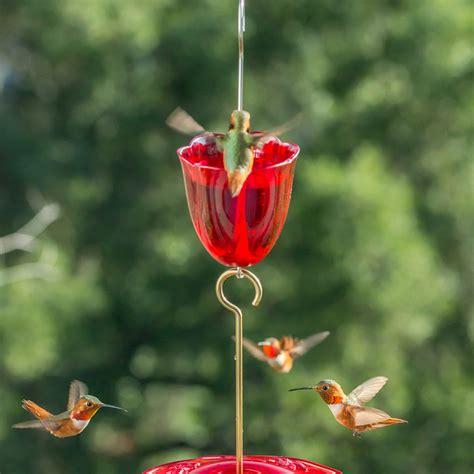 droll yankees  ant moat   essential nectar bird
