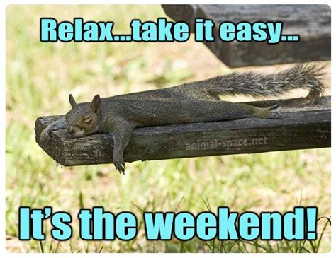 Relax Meme - 52 best squirrel memes images on pinterest squirrels adorable animals and fluffy pets