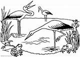 Pond Coloring Pages Frogs Storks Printable Adults Friends sketch template