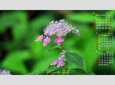 2017年6月のワイド壁紙カレンダー:山紫陽花|無料ワイド高画質壁紙館