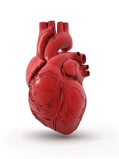 knew   heart trainer