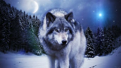 1080p Wolf Wallpaper Hd For Mobile by Wolf Hd Wallpaper On Wallpaperget