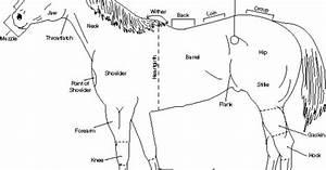 Diagram Of A Horse  Via Ansi Okstate Edu
